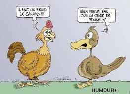 canard poule